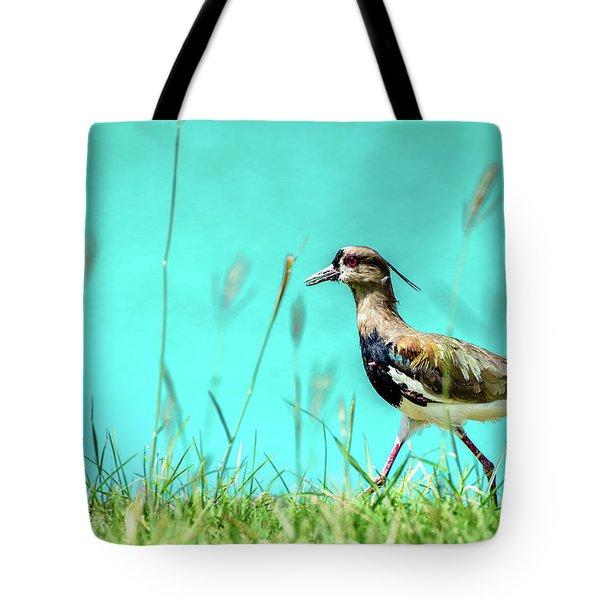 Southern Lapwing Tote Bag by Randy Scherkenbach