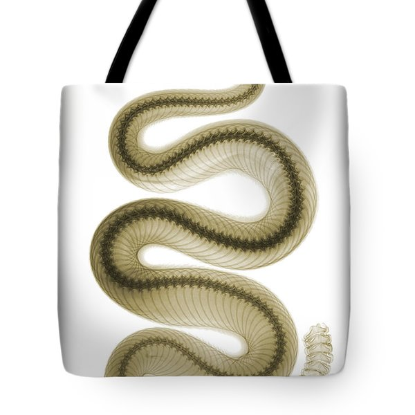 Southern Pacific Rattlesnake, X-ray Tote Bag by Ted Kinsman