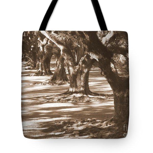 Southern Sunlight on Live Oaks Tote Bag by Carol Groenen