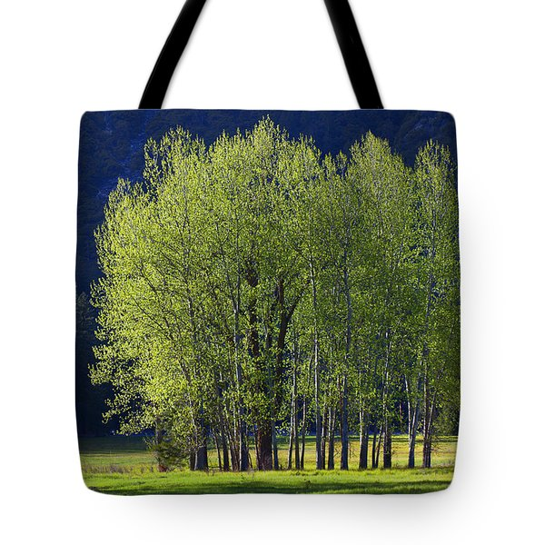 Stand Of Trees Yosemite Valley Tote Bag by Garry Gay