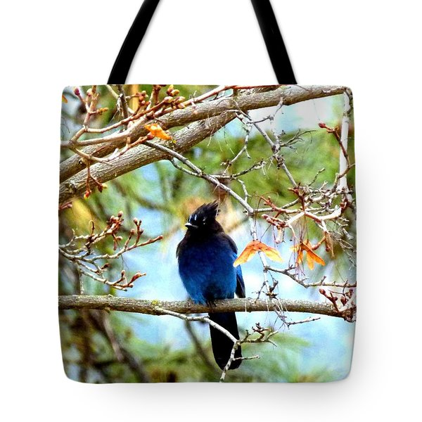 Stellar Jay Majesty Tote Bag by Will Borden