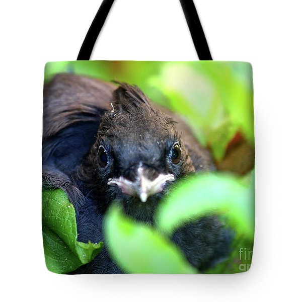 Stellers Jay Chick . 40D501 Tote Bag by Wingsdomain Art and Photography