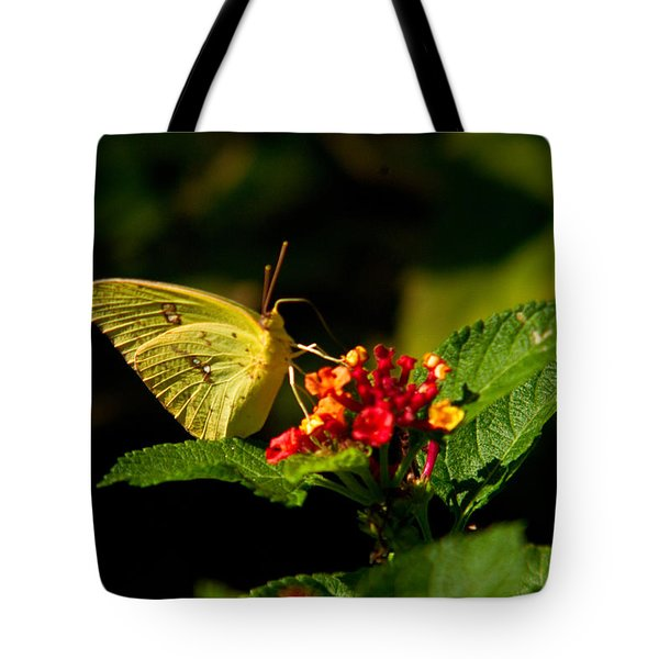 Sulpher Butterfly On Lantana Tote Bag by Douglas Barnett