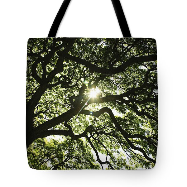 Sunburst Through Tree Tote Bag by Brandon Tabiolo - Printscapes