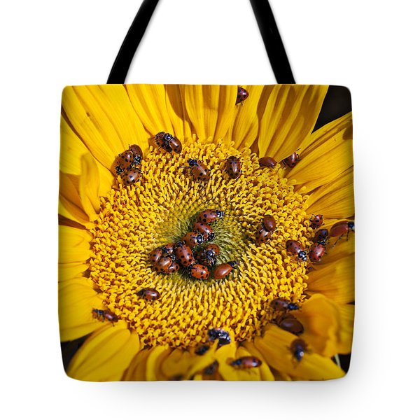 Sunflower covered in ladybugs Tote Bag by Garry Gay