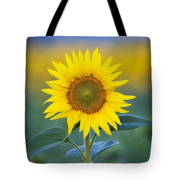 Sunflower Tote Bag by Tim Gainey