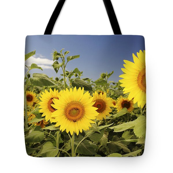 Sunflowers on North Shore Tote Bag by Vince Cavataio - Printscapes