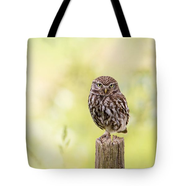 Sunken In Thoughts - Staring Little Owl Tote Bag by Roeselien Raimond