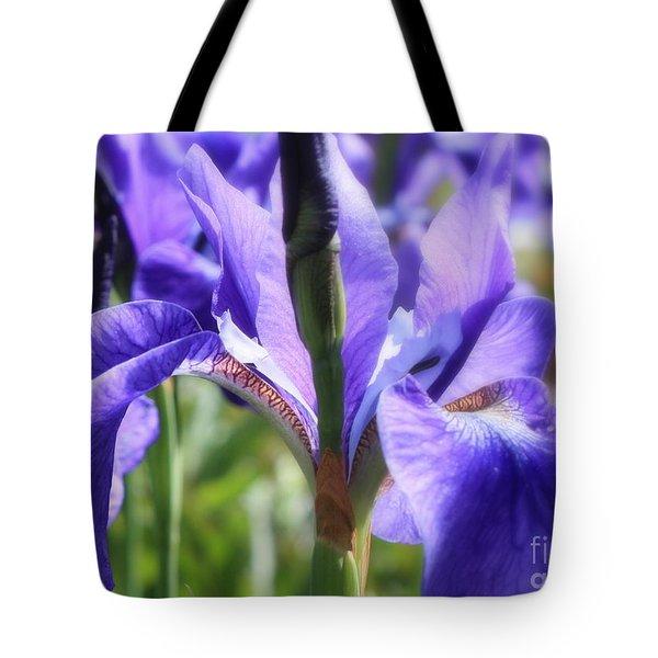 Sunlight On Blue Irises Tote Bag by Carol Groenen