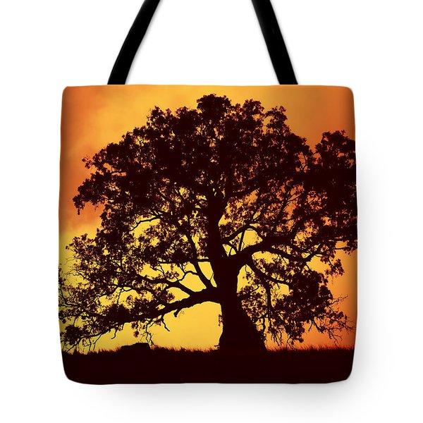 Sunrise Gum Tote Bag by Mike  Dawson
