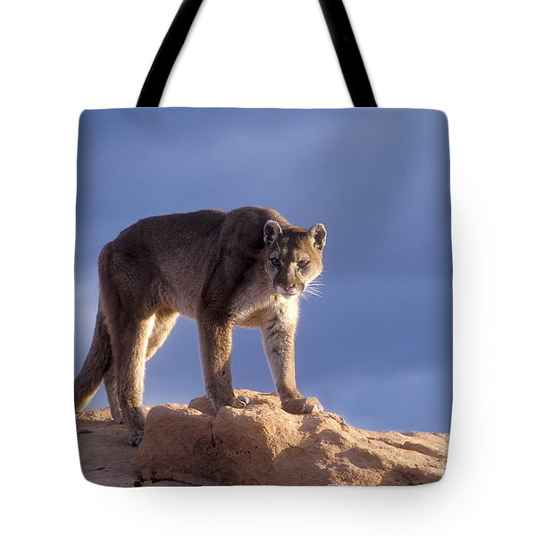 Surveying The Territory Tote Bag by Sandra Bronstein