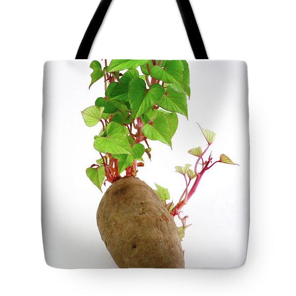Sweet Potato Tote Bag by Gaspar Avila