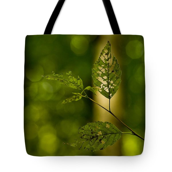 Tattered Leaves Tote Bag by Mike Reid