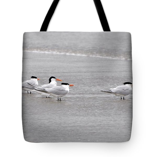 Terns Wading Tote Bag by Al Powell Photography USA