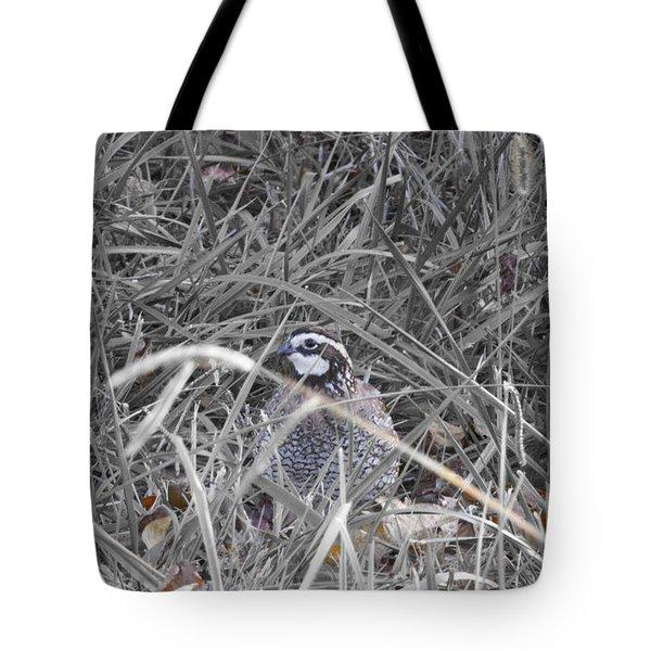 Texas Bobwhite Quail Tote Bag by Douglas Barnard
