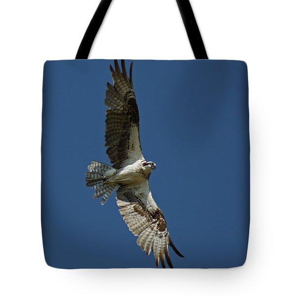 The Osprey Tote Bag by Ernie Echols
