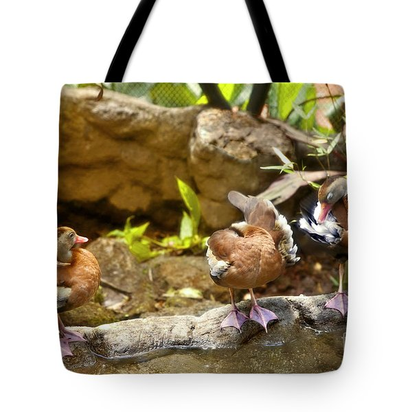 Three Ducks Tote Bag by Madeline Ellis