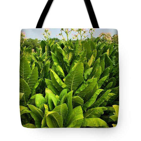 Tobacco Tote Bag by Kristin Elmquist