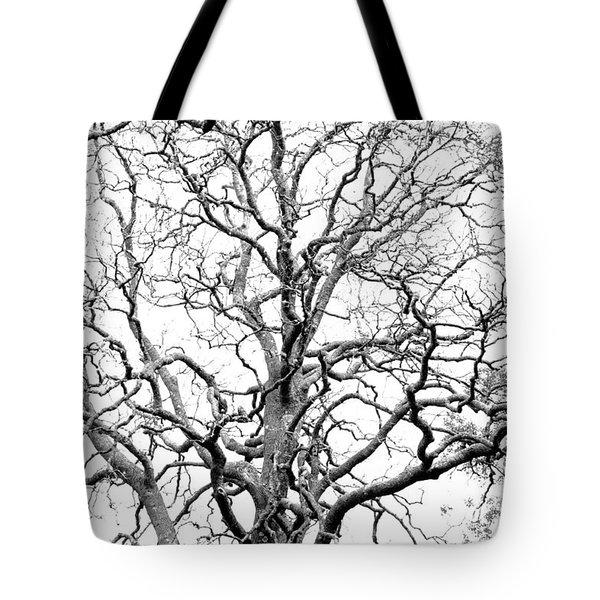 Tree Branches Tote Bag by Gaspar Avila