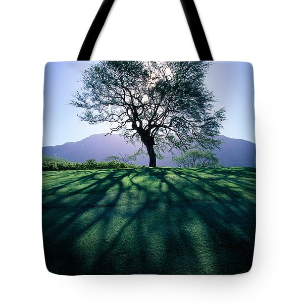 Tree On Grassy Knoll Tote Bag by Carl Shaneff - Printscapes