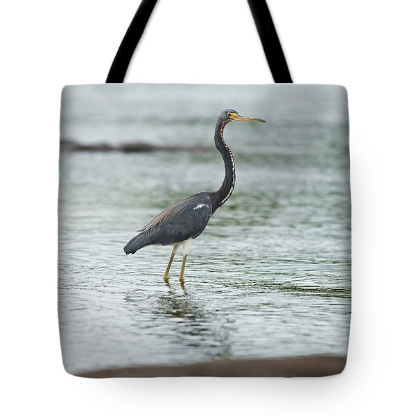 Tricolored.. Tote Bag by Nina Stavlund