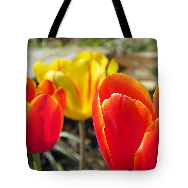 Tulip Celebration Tote Bag by KAREN WILES