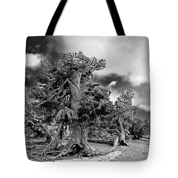 Twisted old Bristlecone Pine above Crater Lake - Oregon Tote Bag by Christine Till