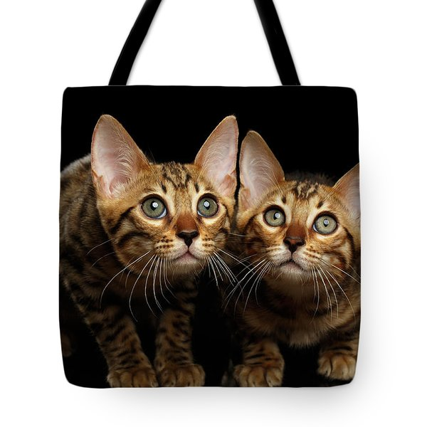 Two Bengal Kitty Looking In Camera On Black Tote Bag by Sergey Taran