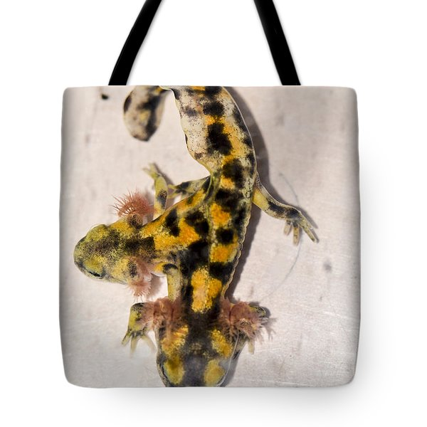 Two-headed Near Eastern Fire Salamande Tote Bag by Shay Levy