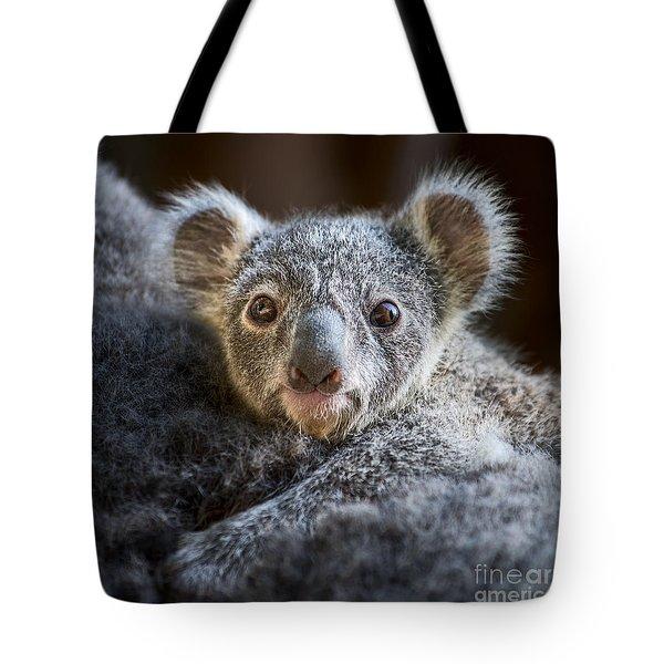 Up Close Koala Joey Tote Bag by Jamie Pham