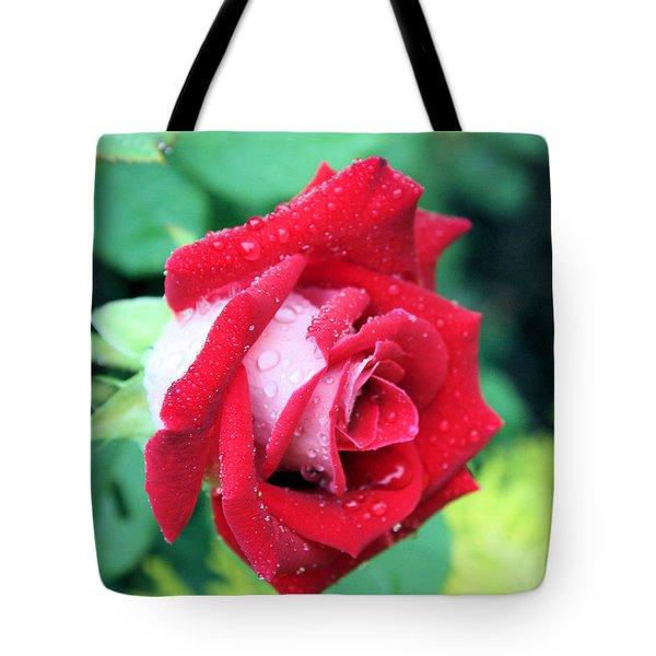 Very Dewy Rose Tote Bag by Kristin Elmquist