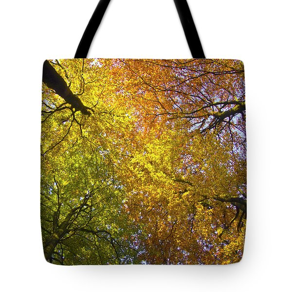View To The Top Of Beech Trees Tote Bag by Heiko Koehrer-Wagner