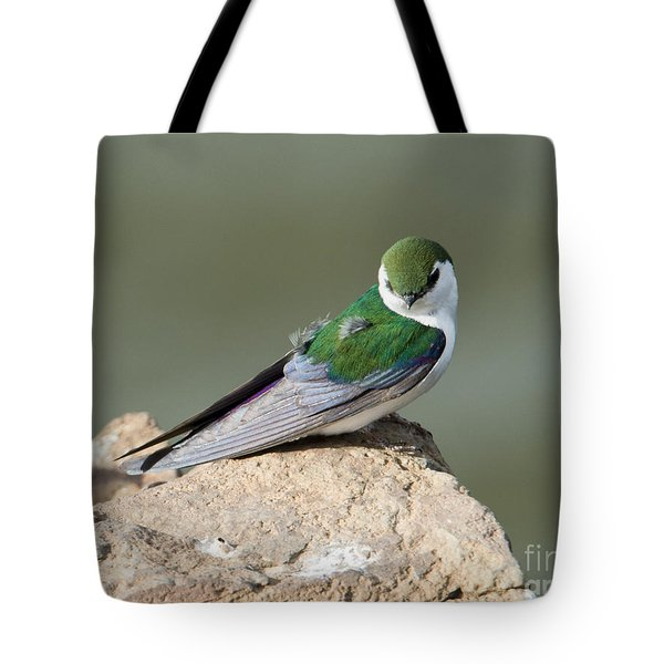 Violet-green Swallow Tote Bag by Mike Dawson