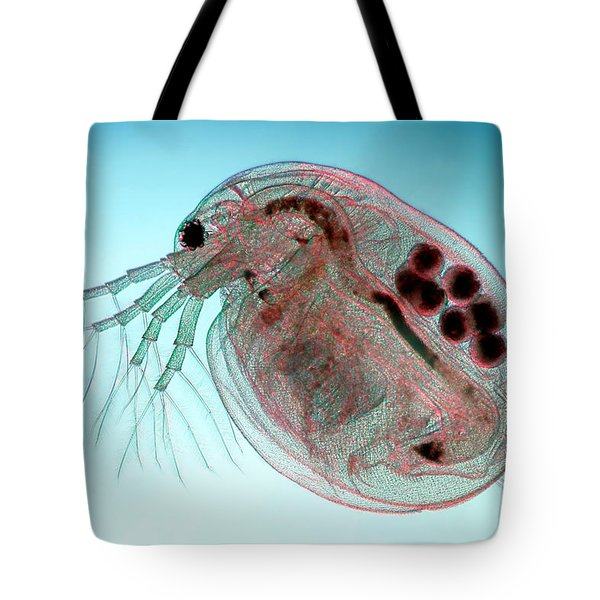 Water Flea Daphnia Magna Tote Bag by Ted Kinsman