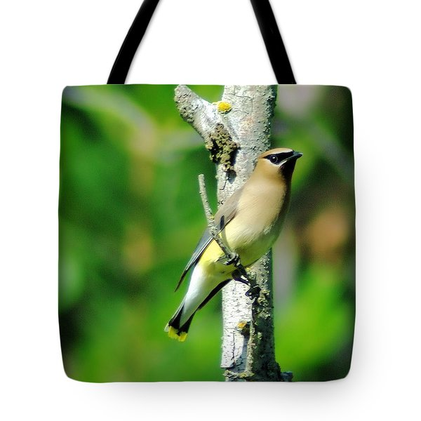 Wax Wing In A Small Branch  Tote Bag by Jeff Swan