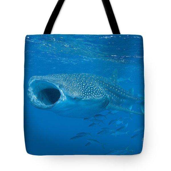 Whale Shark, Ari And Male Atoll Tote Bag by Mathieu Meur