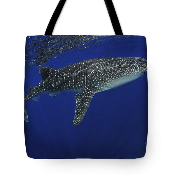 Whale Shark Near Surface With Sun Rays Tote Bag by Mathieu Meur