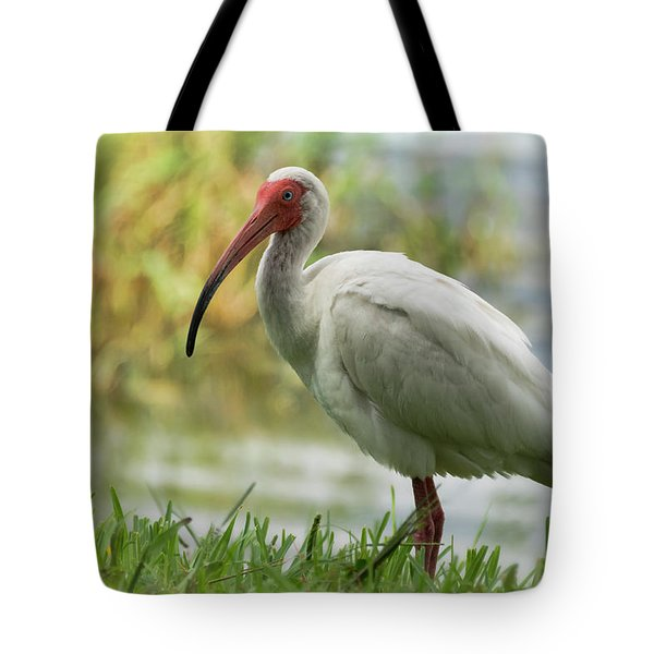 White Ibis On The Florida Shore  Tote Bag by Saija Lehtonen