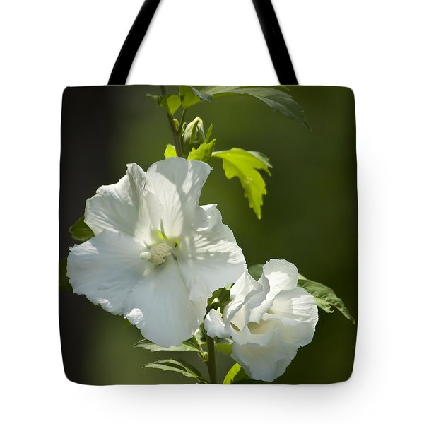White Rose Of Sharon Squared Tote Bag by Teresa Mucha