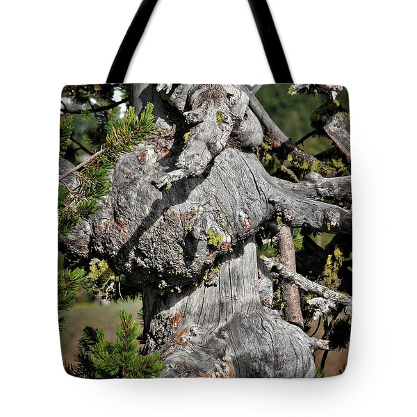 Whitebark Pine Tree - Iconic Endangered Keystone Species Tote Bag by Christine Till