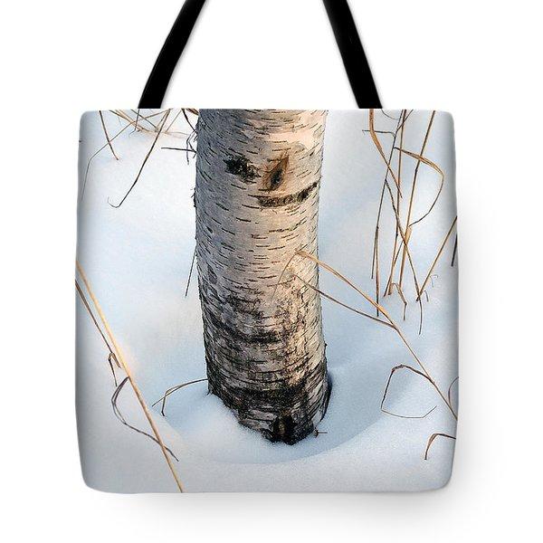 Winter Birch Tote Bag by Bill Morgenstern