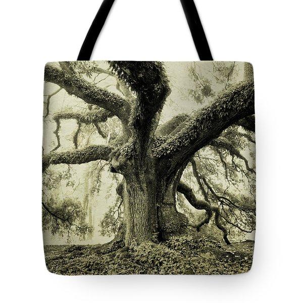 Winter Oak Tote Bag by Scott Pellegrin