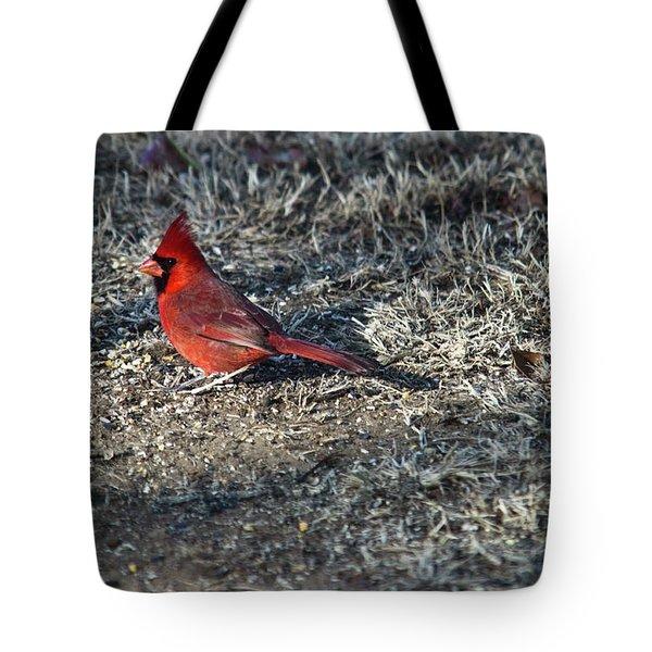 Winter Redbird Tote Bag by Douglas Barnett