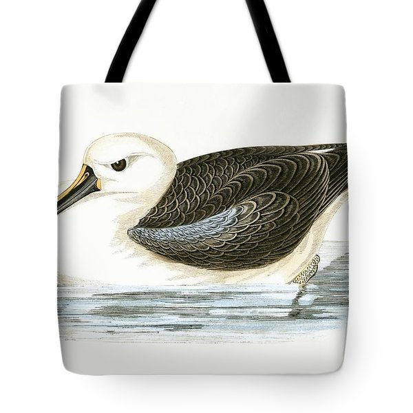 Yellow Nosed Albatross Tote Bag by English School