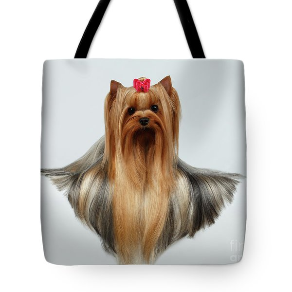 Yorkshire Terrier Dog With Long Groomed Hair Lying On White  Tote Bag by Sergey Taran