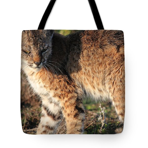Young Bobcat 01 Tote Bag by Wingsdomain Art and Photography