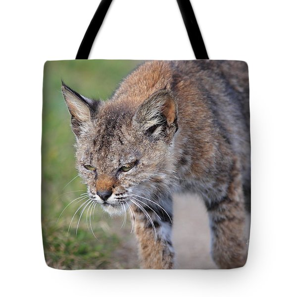 Young Bobcat 03 Tote Bag by Wingsdomain Art and Photography