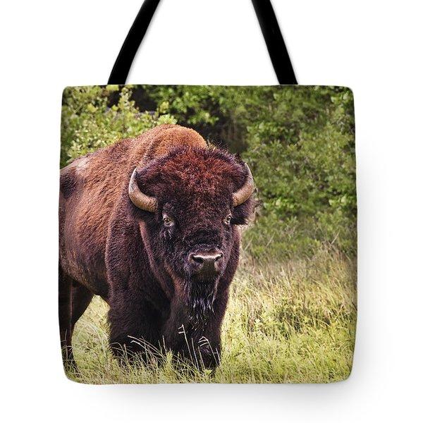 Young Buffalo Tote Bag by Tamyra Ayles
