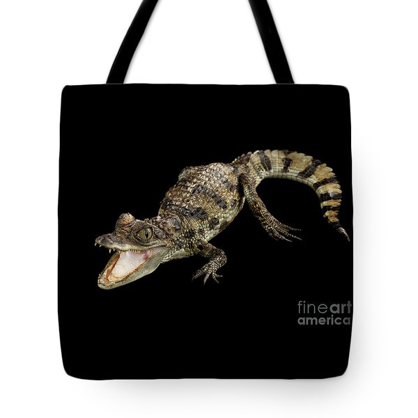 Young Cayman Crocodile, Reptile With Opened Mouth And Waved Tail Isolated On Black Background In Top Tote Bag by Sergey Taran