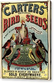 1890s Uk Carters Bird Seed Birds Acrylic Print by The Advertising Archives